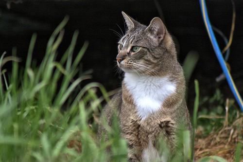 'Scape Cat