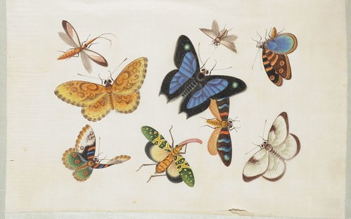 Butterfly Album b