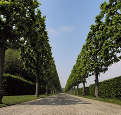 Dieser Weg wird steinig und schwer..... (Ute Burkowski) Tags: park natur hannover der bume garten baum weg hannoverimmai2010 herrenhaser