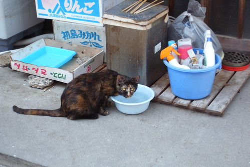 Today's Cat@2010-06-13