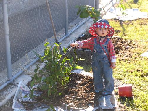 ashar planting