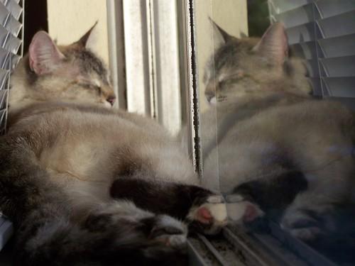 june 036 Violet in my office window