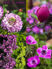 20100327_ArtKnappsFlowers-1