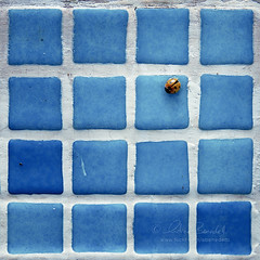 good luck charm () Tags: africa blue andy insect design pattern graphic good blu andrea charm andrew symmetry morocco tiles luck marocco marrakech ladybug marrakesh fortuna insetto simmetria coccinella benedetti buona portafortuna maioliche nikond90