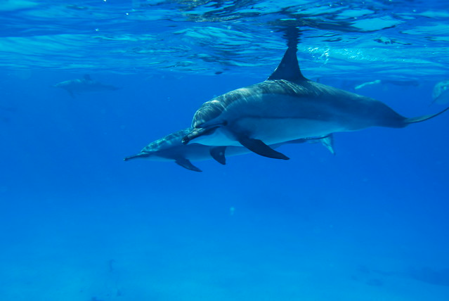 Dolphin House, Sha'ab Samadai Reef