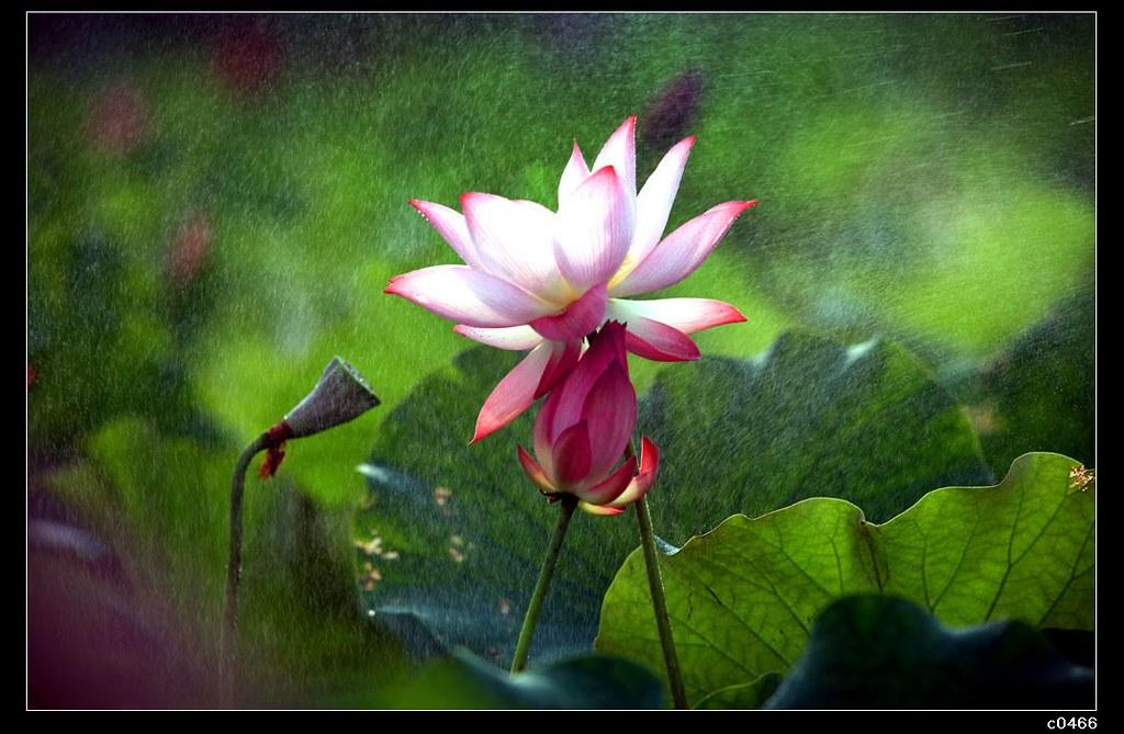 http://farm5.static.flickr.com/4029/4716593625_b449998557_b.jpg