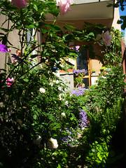 Fiori tra il verde (renagrisa) Tags: flowers italy milan flower nature fleur fleurs italia shot bokeh milano fiori simply 1001nights giardini potofgold blueribbonwinner simplyflowers floralfantasy thepower abigfave nikonclub grouprules platinumphoto colorphotoaward mycameraneverlies oftheflower brillianteyejewel betterthangood theperfectphotographer goldstaraward marvelsnote top20flowerswithbugs natureselegantshots rubyphotographer auniverseofflowers lefotopiùbelledelmondo artofimages dragonsdanger