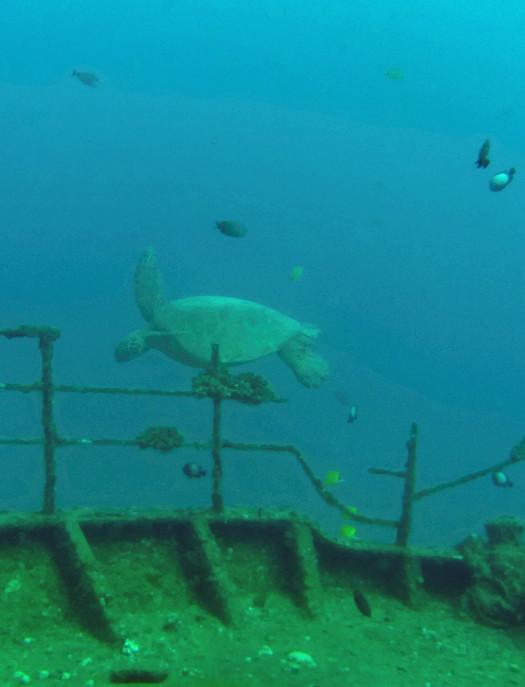 scuba diving oahu 047