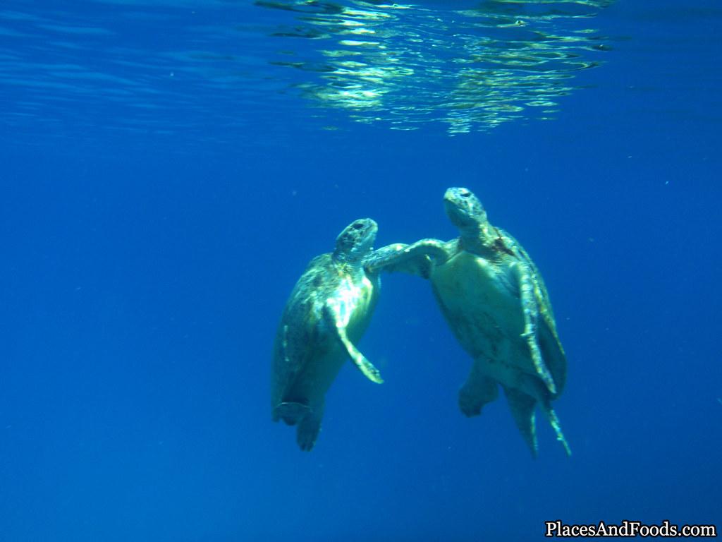 turtle bay3