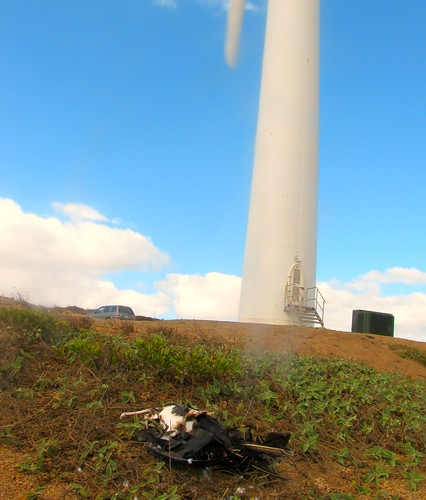 Island battery: Is supplying 10 percent of Oahu's power worth destroying Lanai?
