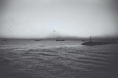 Monochromatic Bosphorus (David A Córdova M) Tags: sky bw water birds 35mm turkey photography boat photo asia foto shot picture nb bn fotografia amateur bosphorus davidcordova deividcordova