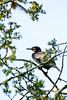 Lichen Shag in a Tree (Catching Magic) Tags: tree bird nature lichen tiraudan shag