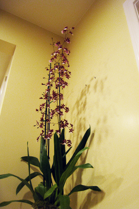101410_orchid01