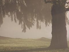 October Morning (donsutherland1) Tags: morning autumn light shadow sun ny newyork tree fall nature sunshine fog october illuminated 1001nights soe larchmont titlephotosharingimg topshots a height48 anawesomeshot flickraward hrefhttpwwwflickrcomgroups83374492n00 srchttpstaticflickrcom1042978201971b62ce7b44ojpg width129 altnominateda saariysqualitypictures fleursetpaysages flickrsportal bonniebriarcountryclub