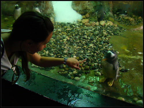 Pingüino amistoso