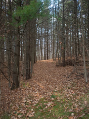 Path in the Woods (David R. Crowe) Tags: autumn plant canada tree nature seasons time places waterloo northamerica on attributes bareness