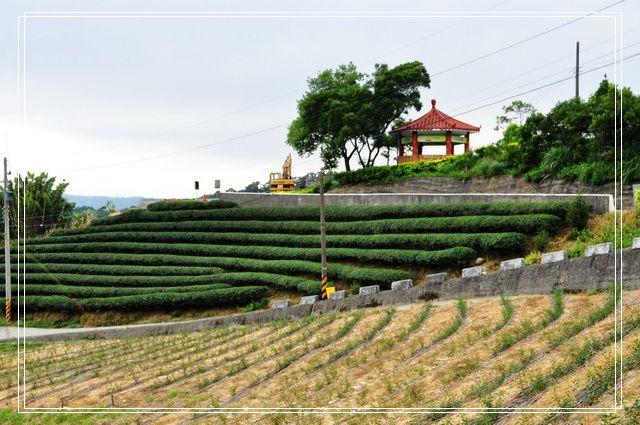 三水茗園~茶裡王16