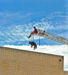 K-9 Lift (jhhwild) Tags: training exercise firefighters crane lifting lift k9 unit canine dog german shepherd