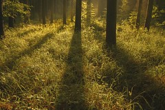 Welcome... (frantiekl) Tags: forest woodland light trees shadows nature landscape relax relaxation scenery sunny mysterious wild wildflowers fog silence harmony
