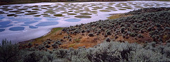 spotted lake (albatz) Tags: panorama lake canada bc desert sage osoyoos okanogan spottedlake lplakes