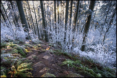 Icy Trail (Greg Nissen) Tags: trees beautiful oregon lens ed high nikon butte day greg dynamic angle path or wide super hike eugene trail d200 spencers icy nikkor gregory range hdr f3545g nissen niss 541 1024mm gregoryniss