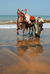 Goa,Mad Cow! (konstantynowicz) Tags: light shadow sea sun sunlight india reflection slr beach wet beautiful skyline canon mirror golden coast cow seaside interesting asia colours bright market character tide goa wave sunny sage anjuna sacred canon350d ripples colourful turban sacredcow 5photosaday mygearandmepremium mygearandmebronze mygearandmesilver