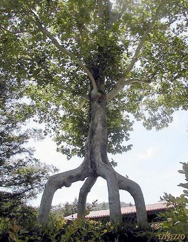 foto pohon