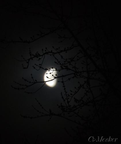 Cold Morning Moonlight