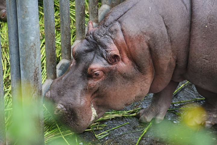 2009木柵動物園0004