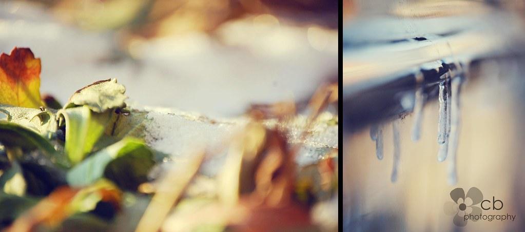 snow day   (8/365)