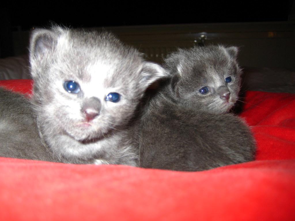 Duszka kittens from december 2009 4263120070_0b93dbc17f_b