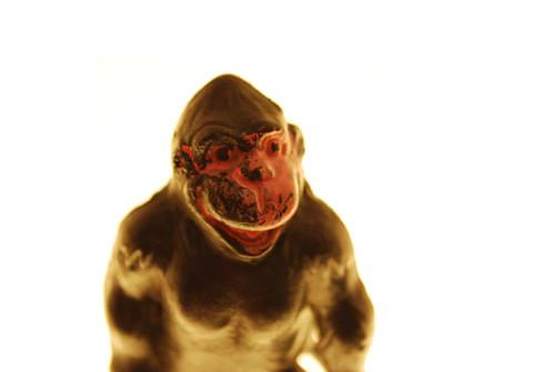 Bright Gorilla