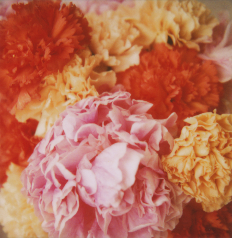 peonies_carnations