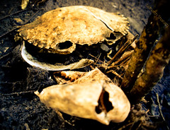 This could be You! (S i d h a r t H) Tags: death crab pollution chemicals creeks toxicity waterpollution stoppollution industrialeffluents