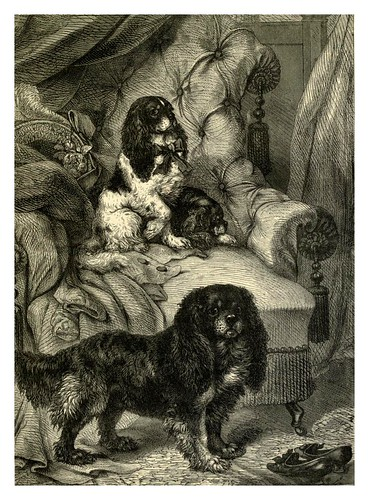 003-Toy Spaniels-The illustrated book of the dog 1881- Vero Kemball Shaw