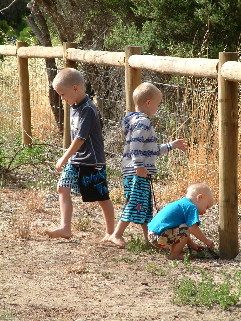 9/365: Boy proof fence