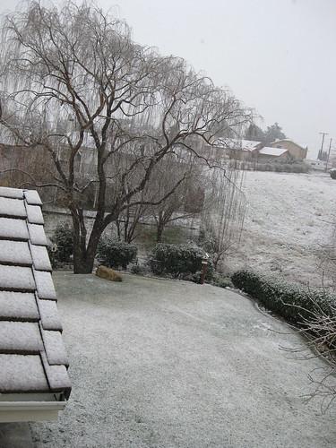 Snow DAY! 003