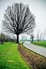 On my way (Giovanni Gori) Tags: road winter italy black tree verde green landscape geotagged nikon strada italia country scenic campagna erba bologna lonely 1001nights albero nero channel paesaggio solitudine d700 nikkor2470mmf28g giovannigori