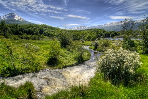 Stream in Patagonia