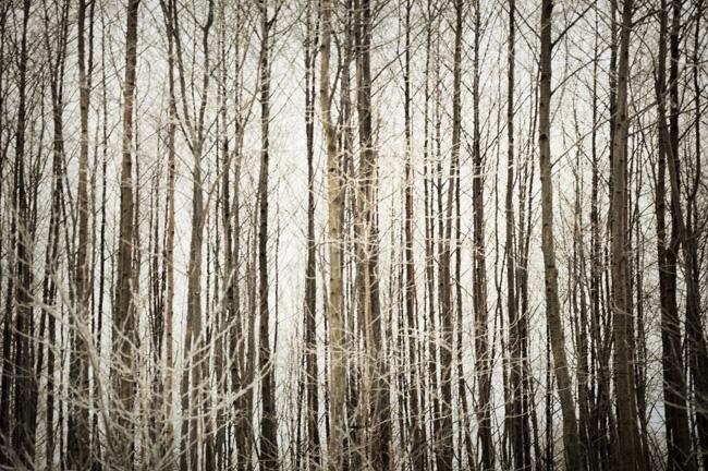 rimfrost 4