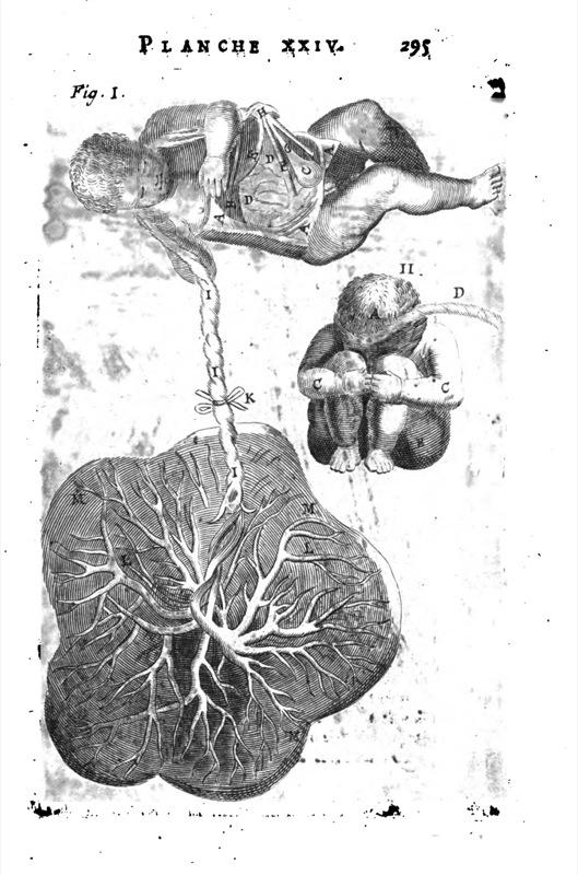 planche danatomie en relief