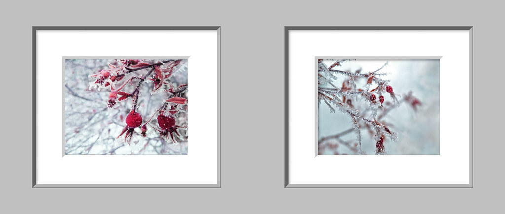 This pair of sparkling cherry red rose hips photographs will bring the beauty of a winter garden inside your home.