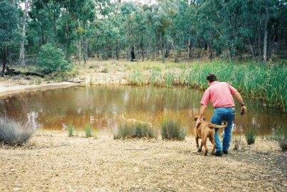 this is the hidden dam in the state forest, it is not our land, but it is just behind it