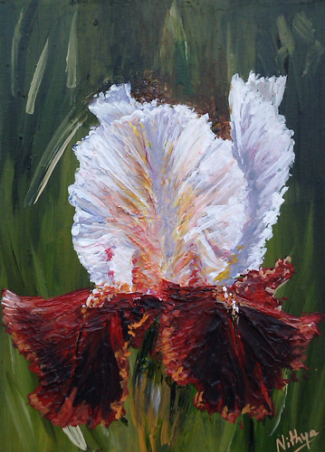 Red and white Iris