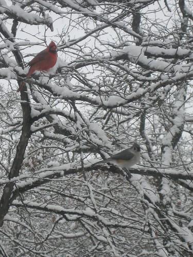 2010February11_Snow 009