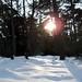Vinter i Tisvilde Hegn