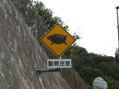 2558 Boar Watch (mari-ten) Tags: animal sign japan warning cycling hiroshima 日本 2008 boar onomichi eastasia shimanami しまなみ海道 広島県 青春18きっぷ 尾道市 生口島 200804 20080402 ikuchiisland seishun18travel