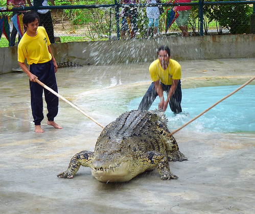Langkawi Crocodile farm9