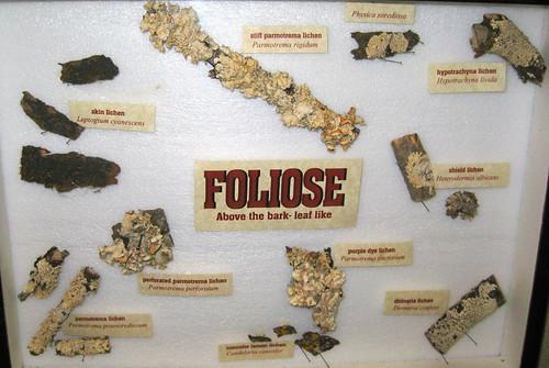 Foliose