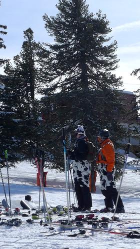 Skiing Austrian Cows